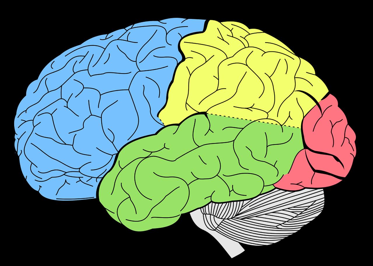 Neuropsychologia - Psycholog Gdańsk